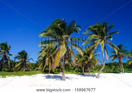 Palm trees on sandy beach in Caribbean sea