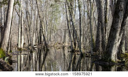Spring forest scenery with flooded trail taken in Ontario