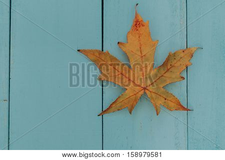 Macro of a dry brown leaf in the fall on a blue wooden background