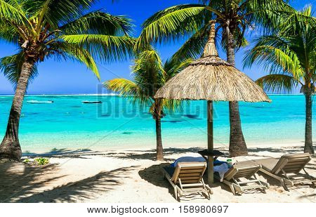Relaxing tropical holidays with beach chairs under palm trees.