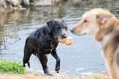 Постер, плакат: The Dogs Playing On Coast Of A Reservoir
