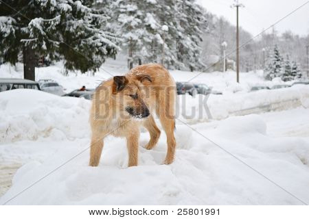 The Puppy On The Snow