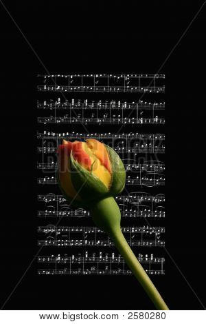 Rose Song
