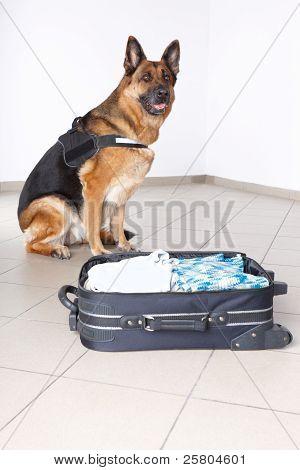 Aeropuerto canino