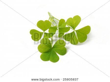 kleine Blätter