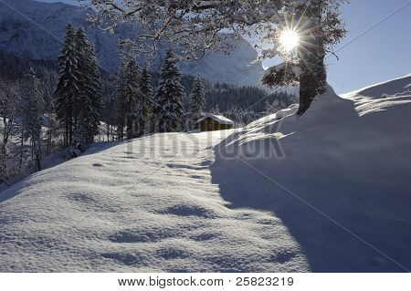 hut and single tree at winter