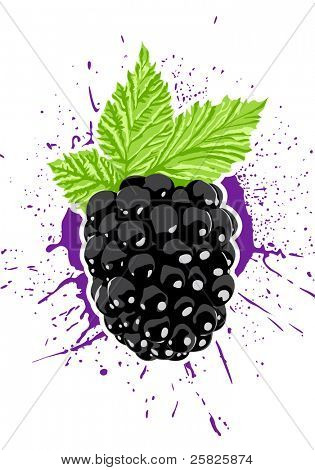 Vector blackberry with splash on background