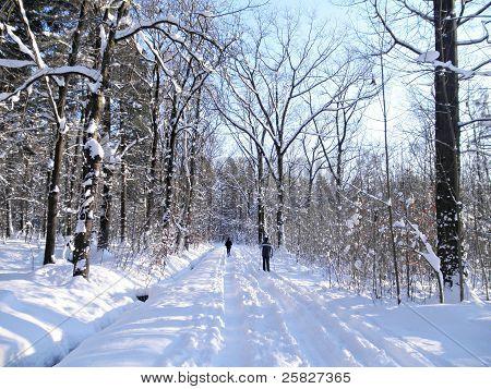 Winter sport in forest