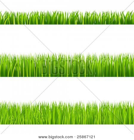 vector illustration of grass