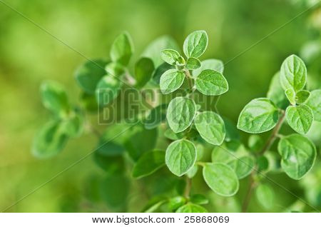 frisch grün ordonanz hautnah