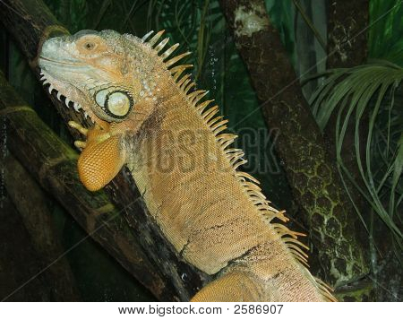 Un reptil