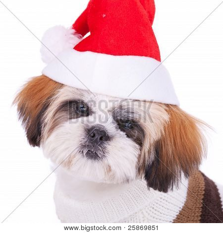 Head Of A Cute Shih Tzu Santa