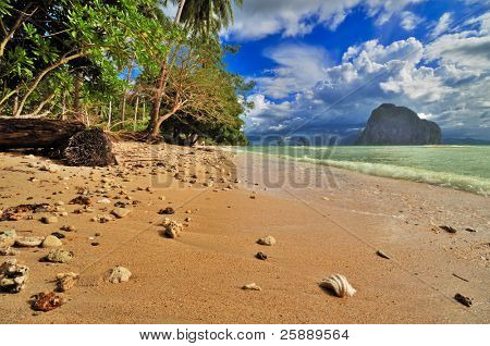 Wild Tropical Sunny Beach with Shells