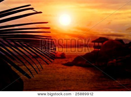 Sunset Bungalow behind the Silhouette of Palm Leaf