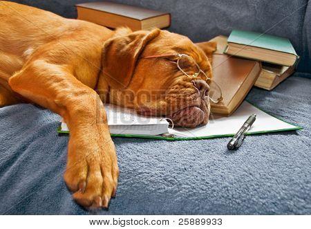 Hund schlafen in ihrem Notizbuch nach dem Studium der