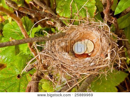Euro Coins in Bird's Nest