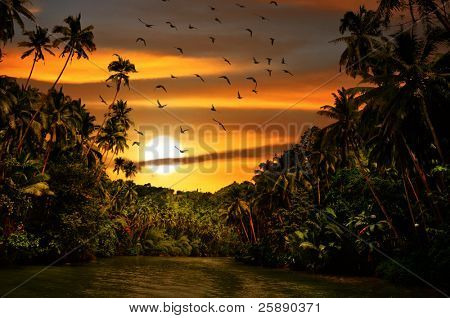 Rainforest safari river cruise with flock of birds in sunset light