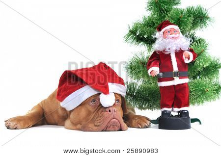 Santa Dog and Real Santa under a Christmas tree
