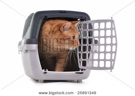 Cat looking out cautiously of its cage