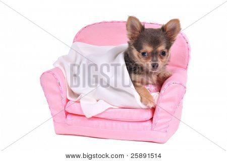Small Dog's Comfortable Bed