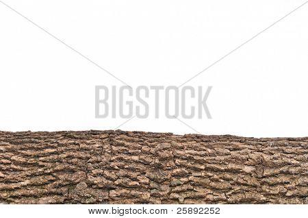 Primer plano de aislados del tocón / trozo con textura de la corteza de madera