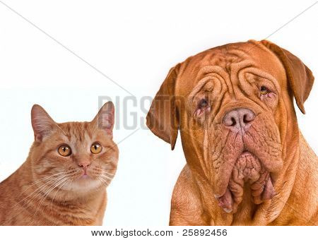 Close-up portrait of a cat and dog (kitten and puppy), isolated on white background