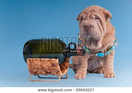 Sharpei puppy is sitting near a wine bottle on a hanger