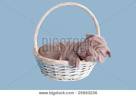 Sharpei puppy sleeping sweatly in a handmade basket