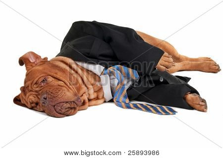 Tired dog businessman is having a rest  on the floor