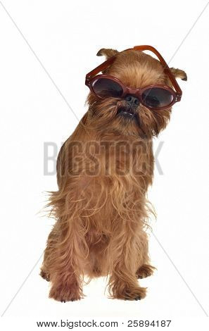 Funny dog with glasses, isolated