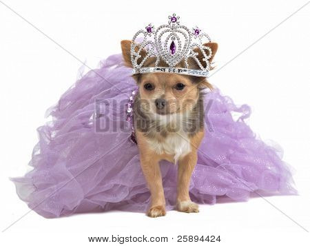 Princess dog with diadema and magnificent dress