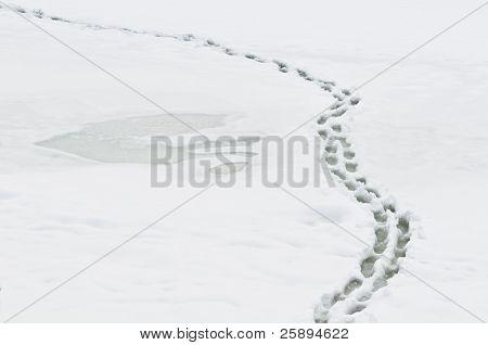 Camino de invierno con la human steps en brillante nieve