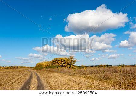 Path On Autumn Field