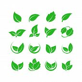 Green Leaf Vector Icons. Spring Leaves Ecology Symbols. Green Leaf And Spring Nature Organic Illustr poster