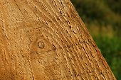 Old Wood Texture Wooden Tree Hardwood Wall poster
