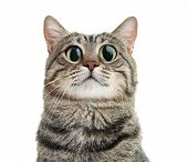 Funny Cat With Big Eyes On White Background. Cute Pet poster
