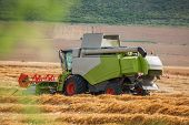 Harvesting Wheat Harvester On A Sunny Summer Day poster