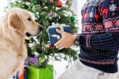 Cropped View Of Man In Christmas Sweater Giving Present To Golden Retriever poster