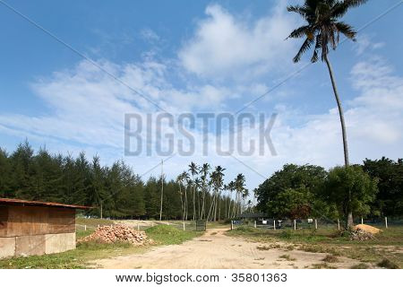 rural scene in a coastal village in Kuantan, Malaysia with a dilapidated hut and coconut plantation.