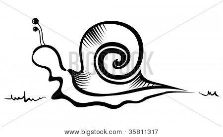 Illustration of slug created in sketch style