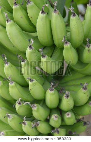 Racimo de bananos