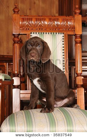Cute Brown Puppy Portrait