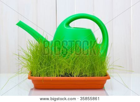 Green grass in a flowerpot and watering can on white wooden background
