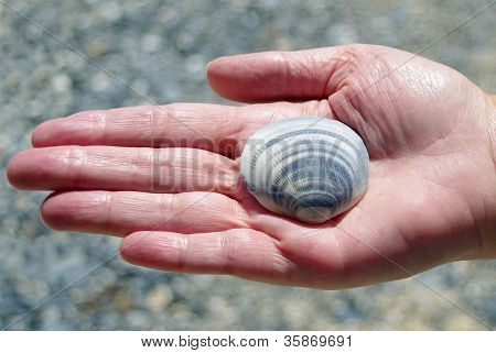 womans hand and seashell