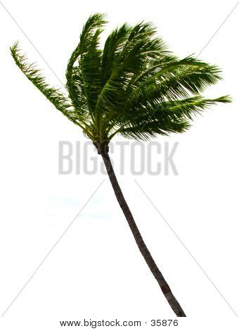 Palm Tree Ausschnitt