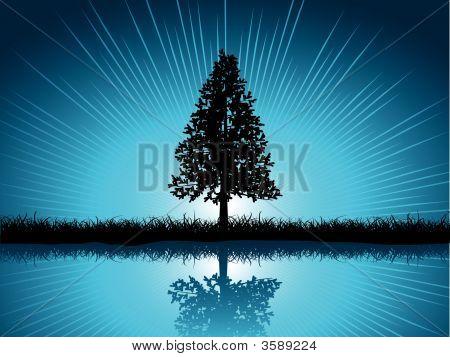 Solitary Fir Tree
