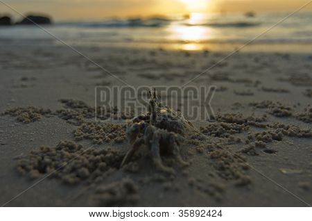 Crabs At The Beach