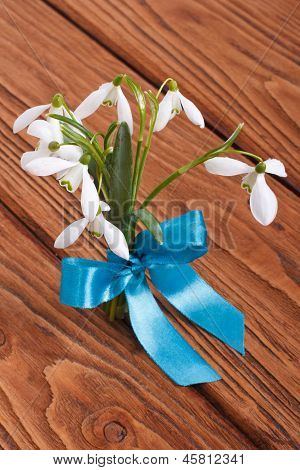 Bouquet of snowdrops tied a blue ribbon
