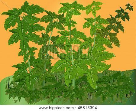 Vegetative Background.
