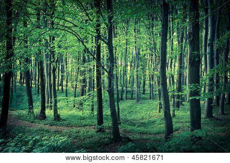 Mysterious Dark Forest Near Rzeszow, Poland